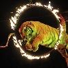 Цирки в Гусевском
