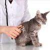 Ветеринарные клиники в Гусевском